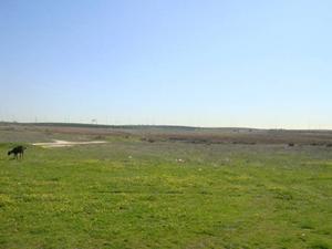 origen huertos ecologicos alcorcon