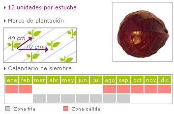Col lombarda c mo cultivar huertos ecol gicos for Como cocinar col lombarda