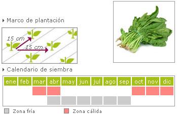 Espinacas como cultivar