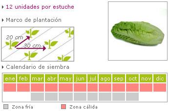 lechuga baby como cultivar