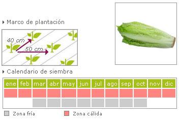 Lechuga Romana como cultivar