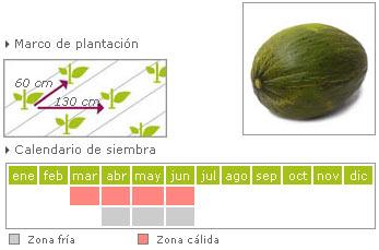 melon como cultivar