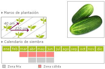 Pepino como cultivar