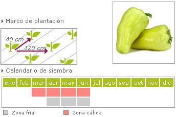 Pimiento blanco como cultivar