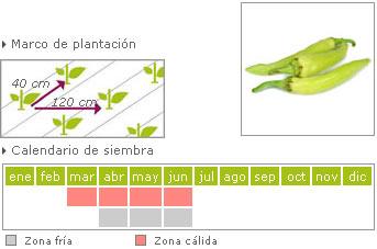 Pimiento picante como cultivar