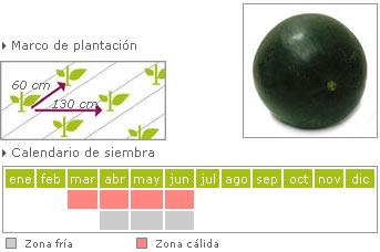Sandia negra como cultivar