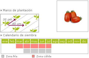 Tomates cherry como cultivar