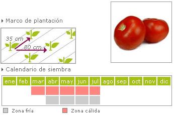 Tomate gordo suel como cultivar