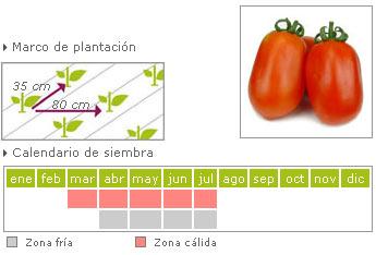 Tomate pera de suelo como cultivar