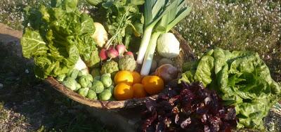 cesta verduras