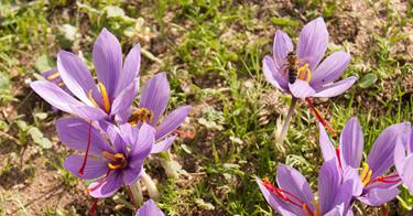 flor ester